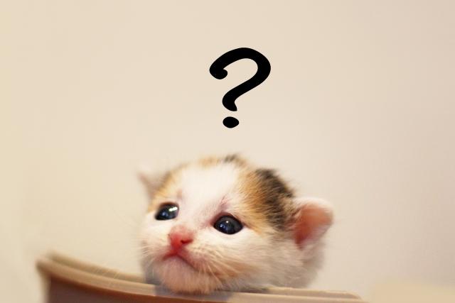 疑問を感じている猫