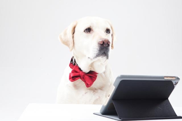 タブレットを見ている犬