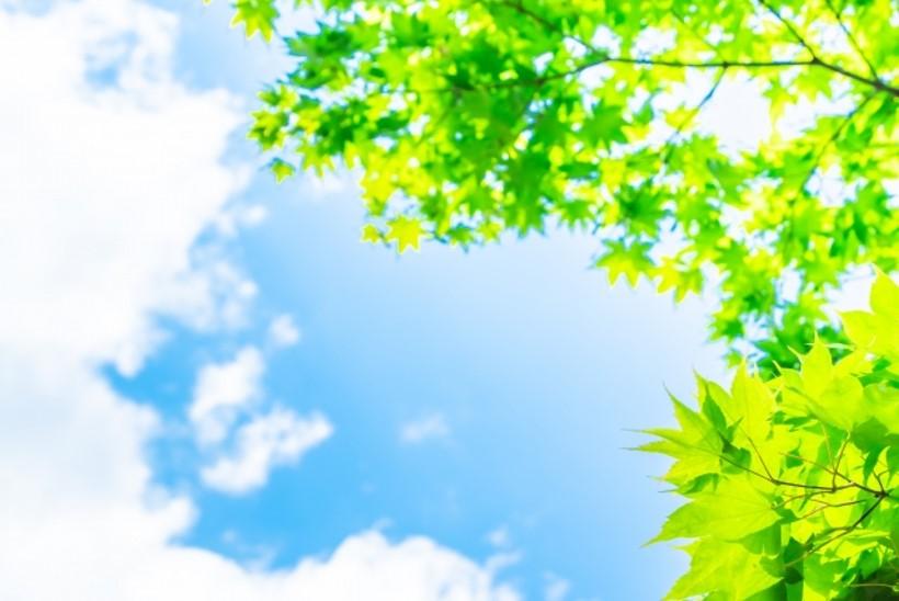 太陽と緑の葉